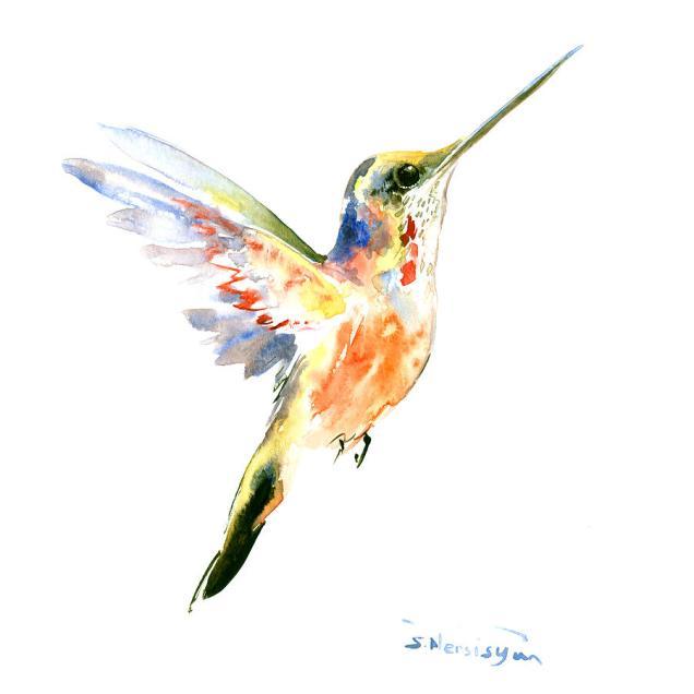 3-hummingbird-suren-nersisyan